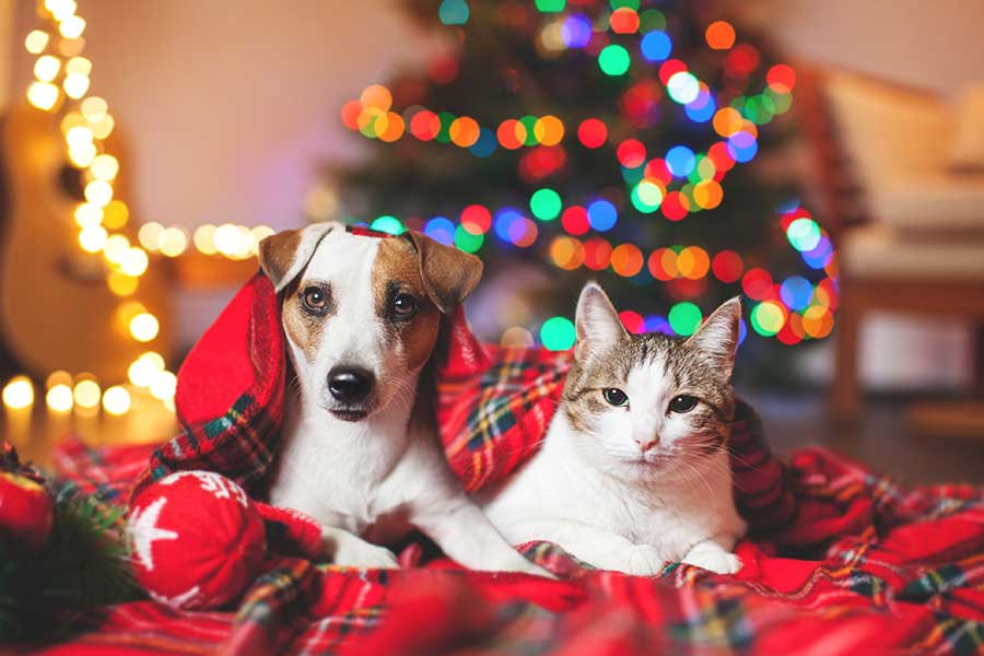 Comfort and Joy Drive - Dog and Cat with Holiday Hats