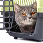 Cat in a pet carrier