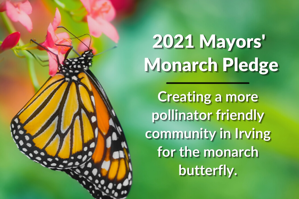 2021 Mayors' Monarch Pledge - Creating a more pollinator friendly community for the monarch