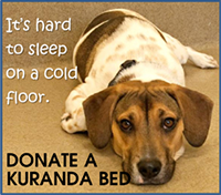 Learn how you can help animals in our shelter sleep easier