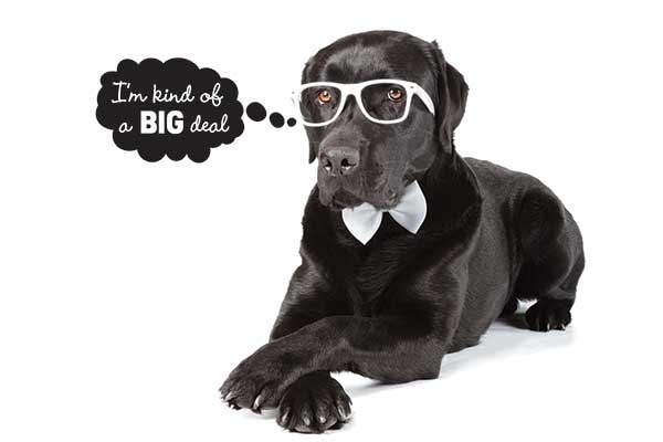 Big Dogs Big Deals All October at Irving Animal Services