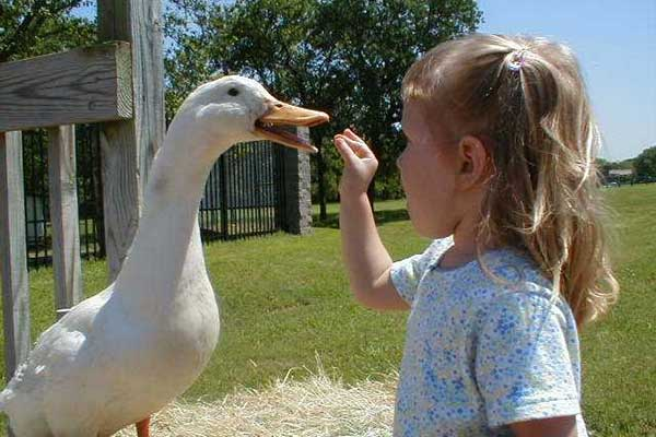 Fritz Park Petting Farm Opens June 1