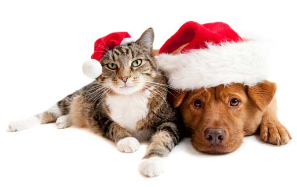 Homeless Animals Hope for Holiday Homes